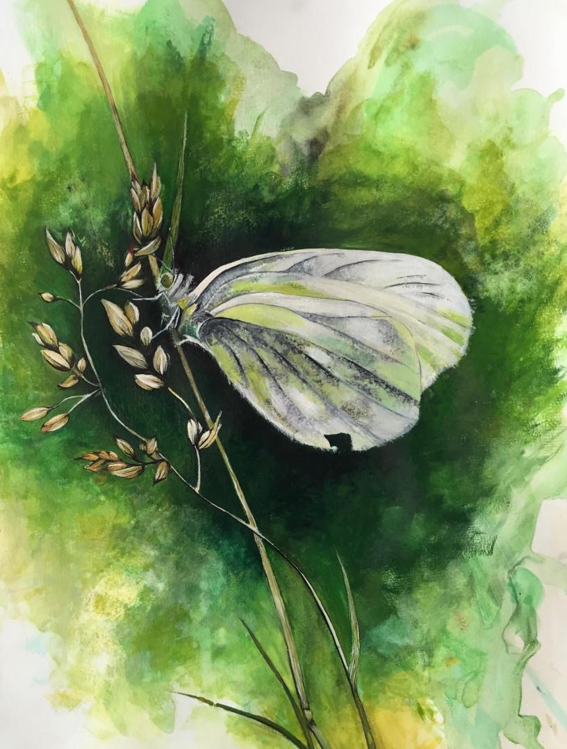 My first watercolor painting butterfly raveberry for My first watercolor painting